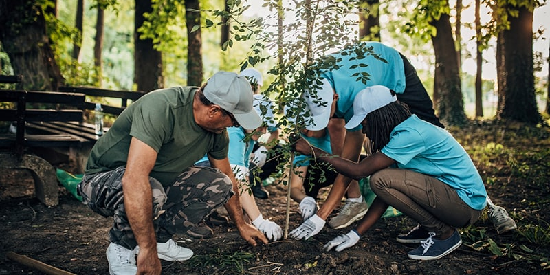 decorative stock image of people planting a tree